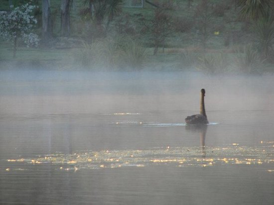 Timara Lodge: Swan On Misty Lake