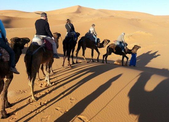 Hotel Kasbah Mohayut: More camels