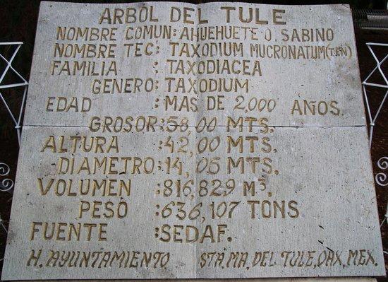 El Tule Tree of Life, Teotitlan Village, and Mitla Ruins Tour: Measures of the Tree