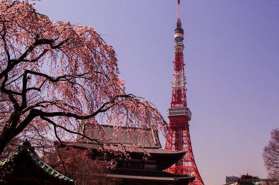 The Prince Park Tower Tokyo: tempio nel parco di shiba sotto l hotel