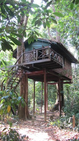 Our Jungle House: forest treehouse