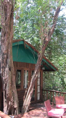 Our Jungle House: sunshine treehouse
