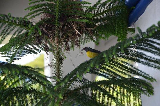 Evergreen Hotel : Birds in dining area :-)