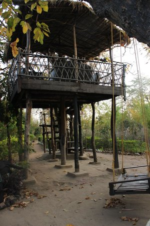 Tiger 'n' Woods: The tree house and the swings are a nice place to hang out when its less sunny