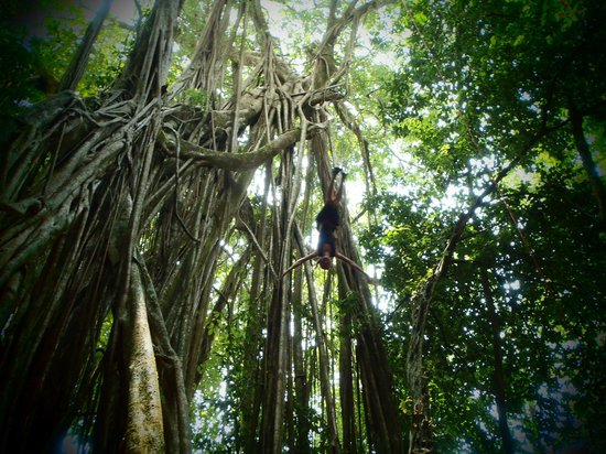 Everyday Adventures Day Tours: In the jungle!