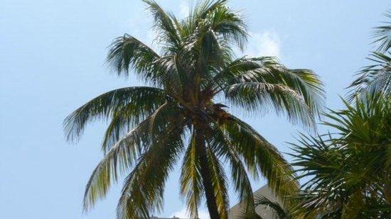 Beachscape Kin Ha Villas & Suites: Palm at the beach