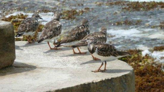 Beachscape Kin Ha Villas & Suites: Shore birds