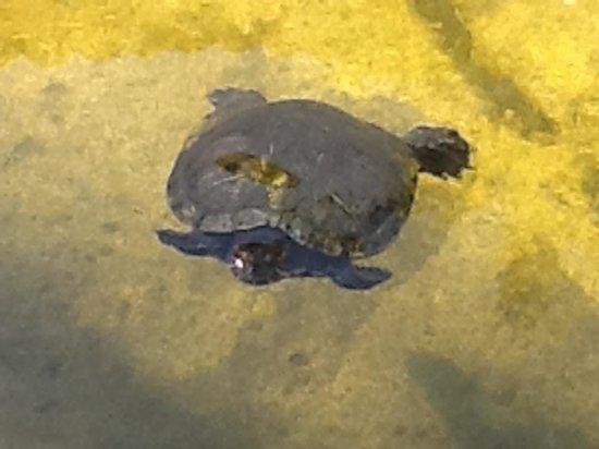 Marina Vallarta Club de Golf: Turtle