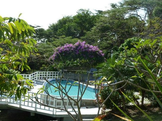 Sugarapple Inn: Pool Foliage