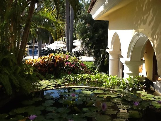 Casa Velas : One of many water gardens