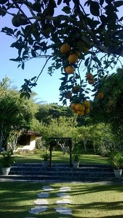 Waterville Estate: Oranges