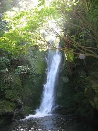 Ohau Point Seal Colony: Ohau Waterfall