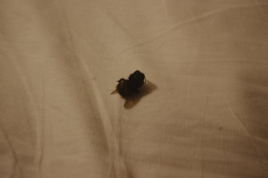 Seymour Hotel : bug