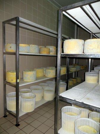 Casale Margherita: der reifende Käse