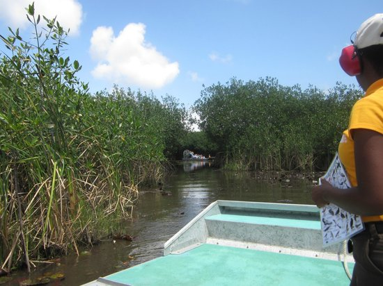 Chukka Caribbean Adventures in Belize: Chukka Airboat Ride