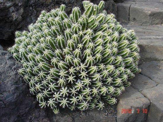 Jardin de Cactus : LE JARDIN