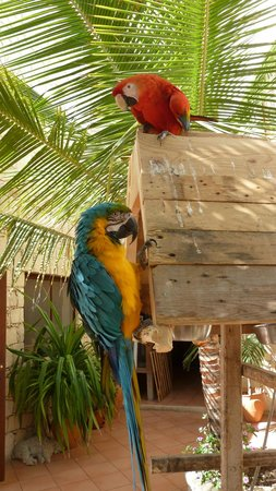 Orquidea Guest House : Parrot