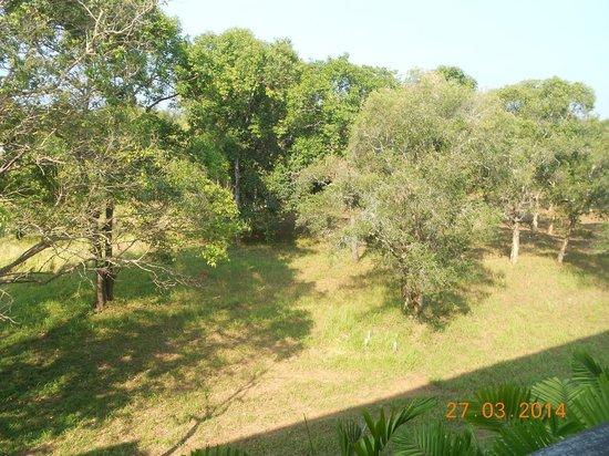 Aree Tara Resort : vue de notre chambre  coté parc