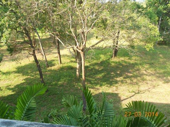 Aree Tara Resort: de notre chambre  coté parc