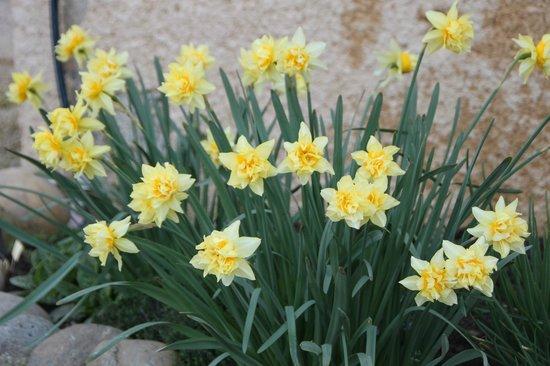Plaine et Colline : les jolies fleurs de Francine