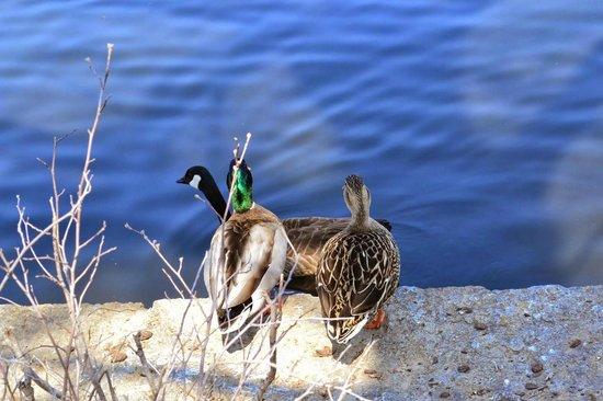 Sprintime love affair at Centennial Park