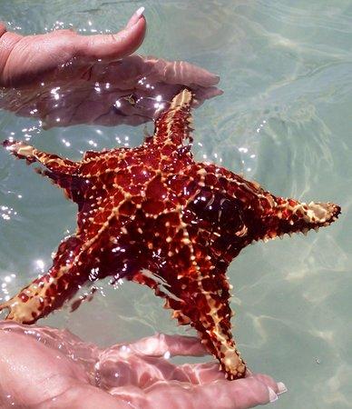 Acquarius Sea Tours: starfish