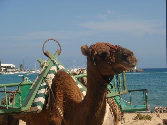 Hotel Elba Carlota : Camel Rides on beach