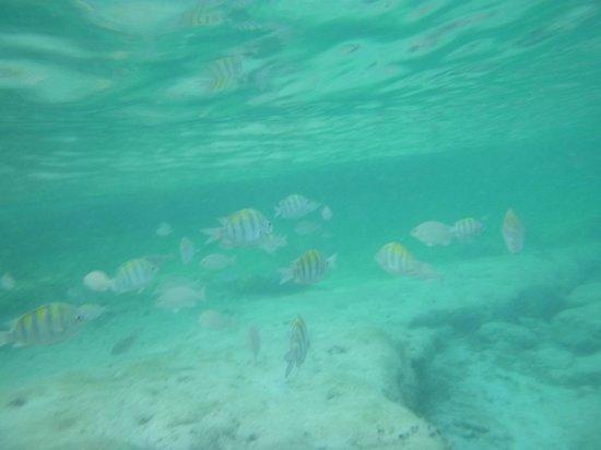 Mia Reef Isla Mujeres: Piscina del rey