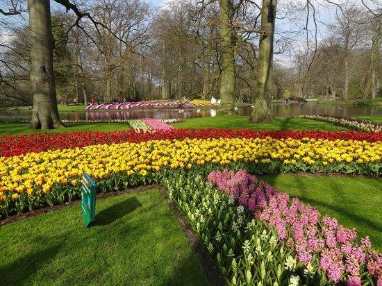 Lisse, Niederlande: Great swaths of colour