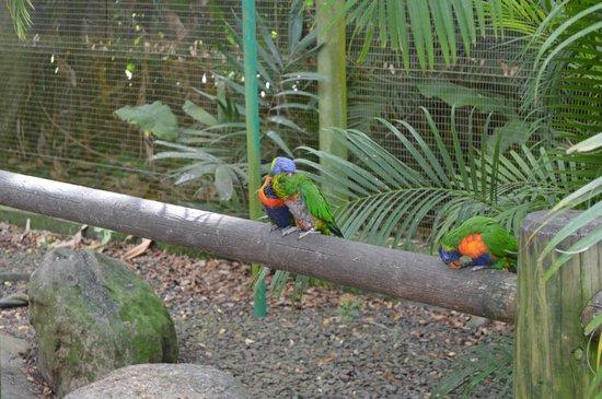 Jardin Botanique de Deshaies : Les Lauris