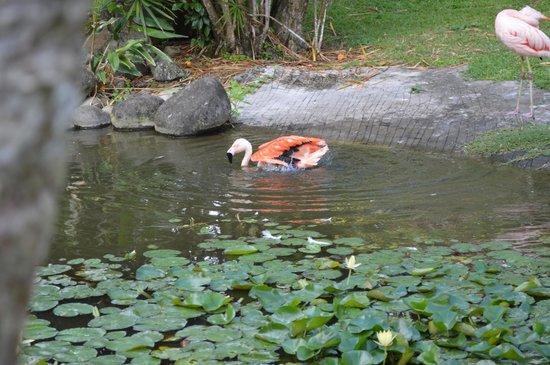 Jardin Botanique de Deshaies : Un flamant rose