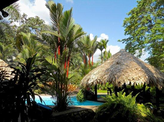 Hotel Banana Azul : Pool area