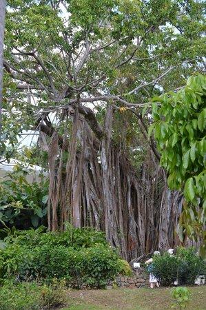 Ara picture of jardin botanique de deshaies deshaies for Jardin botanique 78