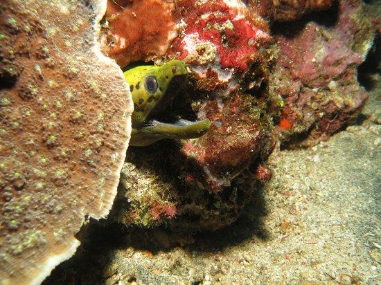 Two Fish Divers Lembongan: green eel