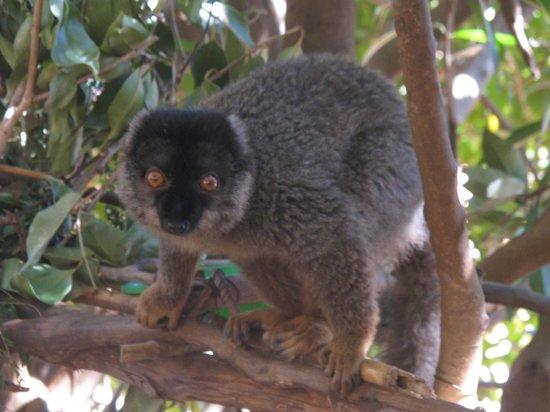 Lemurs Park : Один из лемуров