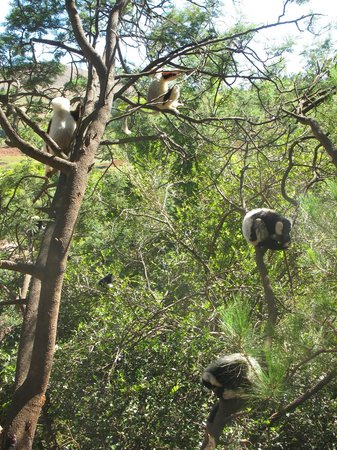 Lemurs Park : Семейство на прогулке