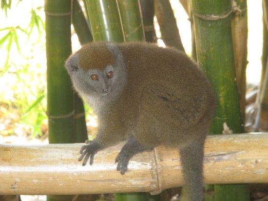 Lemurs Park : Милый лемур