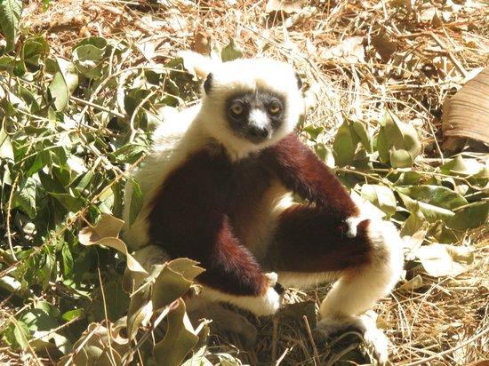 Lemurs Park : Отдыхает