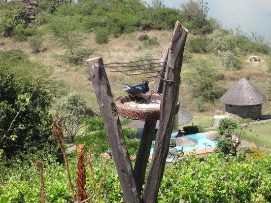 Sunbird Lodge: view from patio