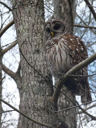 Cajun Country Swamp Tours : The Owl