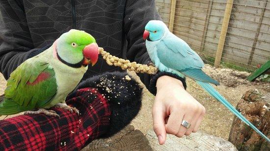 Lincolnshire Wildlife Park: Feeding the birds