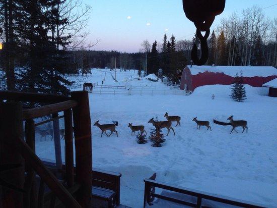 Folk Tree Lodge: Family of deer right outside