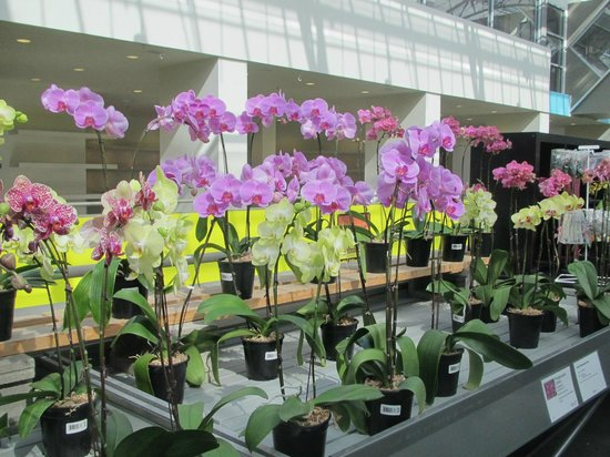 The Enjoy Centre: Orchids 1