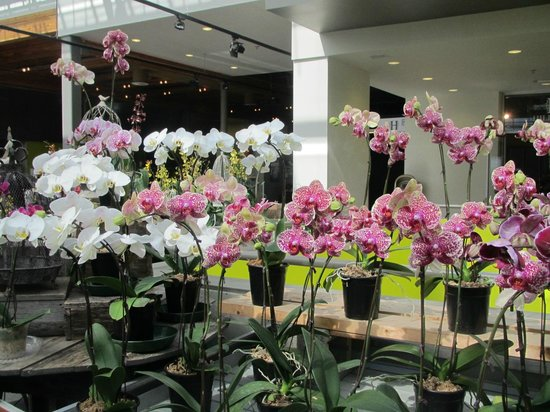 The Enjoy Centre: Orchids 2
