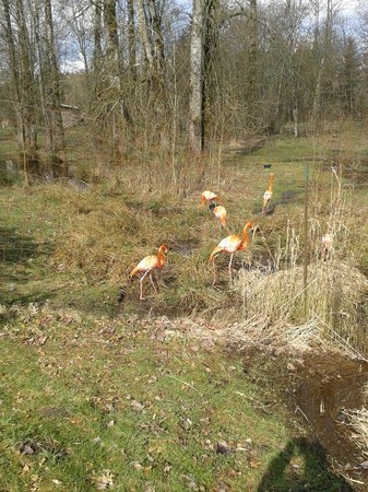 Greater Vancouver Zoo: flamingos