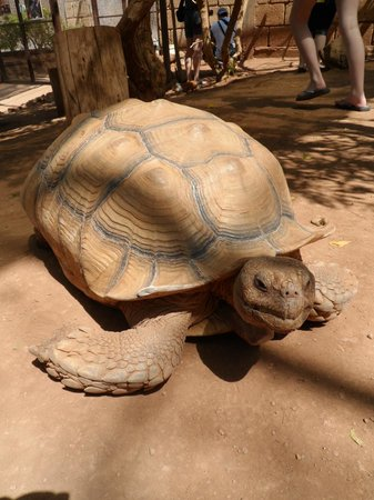Monkey Park : The tortoise