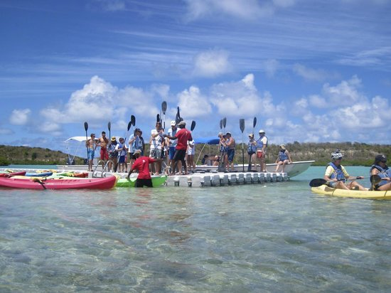 Paddles Snorkel and Kayak Eco Adventure: Paddles up