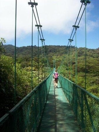 Parque Selvatura: View of one of the longer bridges