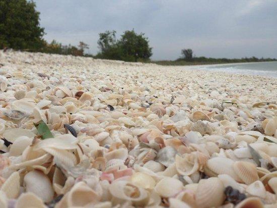 Cape Romano: Shells