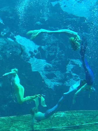 Weeki Wachee Springs : The Graceful Mermaids!